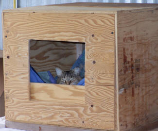 Sheeba in the shelter that Carl built.